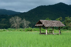 TARGET687_1_ w ryżowym polu. Fotografia Stock