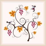 target717_1_ gronowego winograd ptasia elegancja ilustracji