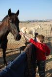target746_1_ zwierząt domowych potomstwa chłopiec konie Fotografia Stock