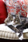 TARGET856_0_ na ławce piękny kot Fotografia Stock