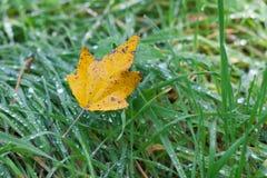 TARGET886_0_ naturę spadek żółci komesi Zdjęcia Royalty Free