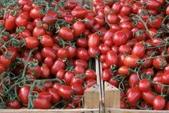 targowi pomidory Obraz Royalty Free
