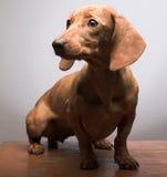 Tarifa del perrito fotografía de archivo