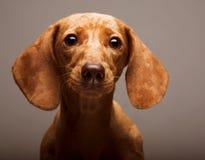 Tarifa del perrito foto de archivo