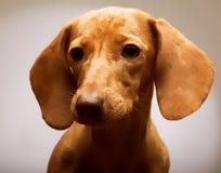 Tarifa del perrito fotos de archivo libres de regalías