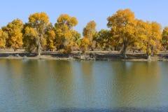Tarim rzeka w iminqak obraz royalty free