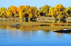 Tarimet River i iminqak Arkivfoton