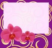 Tarjeta 1-1 de la orquídea imagenes de archivo