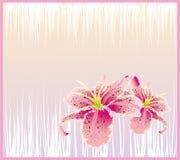 Tarjeta abstracta de la flor Fotografía de archivo libre de regalías