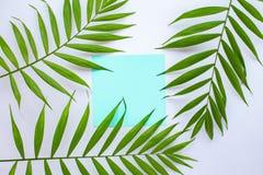 Tarjeta azul en blanco en hojas de palma tropicales, concepto de las vacaciones de verano, disposici?n de la plantilla para a?adi foto de archivo