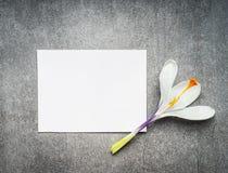 Tarjeta blanca en blanco con la flor del azafrán, visión superior, cierre para arriba primavera Imagenes de archivo