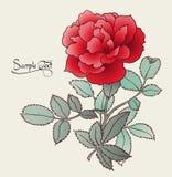 Tarjeta color de rosa del rojo hermoso Imagen de archivo libre de regalías