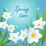 Tarjeta con Daffodils-01 Fotografía de archivo