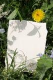 Tarjeta con el diente de león y el otro verdor rico Imagen de archivo libre de regalías