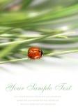 Tarjeta con el pequeño ladybug Imagen de archivo