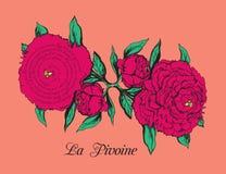 Tarjeta con la peonía y el poema por Apollinaire Foto de archivo
