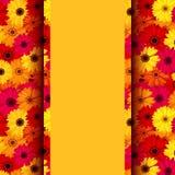 Tarjeta con las flores coloridas del gerbera. Fotos de archivo