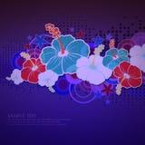 Tarjeta con las flores del hibisco Foto de archivo libre de regalías