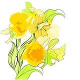 Tarjeta con las flores del narciso Imagen de archivo libre de regalías