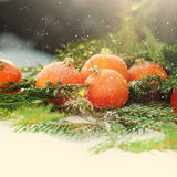 Tarjeta con las mandarinas en la rama del árbol de abeto con nieve, entonada Fotos de archivo libres de regalías