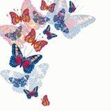 Tarjeta con las mariposas brillantes hermosas Foto de archivo libre de regalías