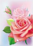 Tarjeta con las rosas Imagen de archivo libre de regalías