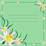 Tarjeta con los narcisos ilustración del vector