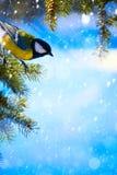 Tarjeta de Art Christmas con los tits en el árbol de navidad y la nieve Fotografía de archivo