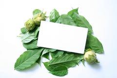 Tarjeta de Busines en las hojas Fotos de archivo