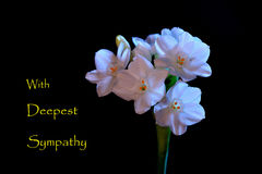 Tarjeta de condolencia Imagenes de archivo