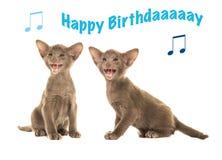 Tarjeta de cumpleaños con los gatos siameses del bebé que cantan feliz cumpleaños Fotos de archivo