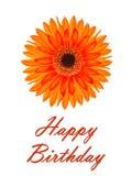 Tarjeta de cumpleaños con una flor del gerbera Imágenes de archivo libres de regalías