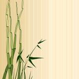 Tarjeta de felicitación con el bambú Foto de archivo libre de regalías
