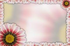 Tarjeta de felicitación con el gerbera colorido Fotografía de archivo