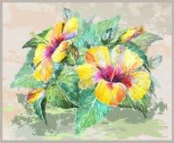 Tarjeta de felicitación con el hibisco Imágenes de archivo libres de regalías