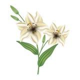 Tarjeta de felicitación con el lirio de las flores El día de madre de la tarjeta, el día de tarjeta del día de San Valentín ilustración del vector