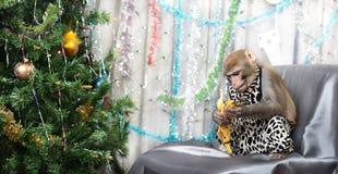 Tarjeta de felicitación con el mono, plátano, árbol del Año Nuevo, decoraciones Imagen de archivo libre de regalías