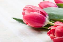 Tarjeta de felicitación con el primer rojo de los tulipanes y espacio para el texto Imagen de archivo libre de regalías