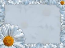 Tarjeta de felicitación con la manzanilla blanca Foto de archivo