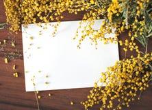 Tarjeta de felicitación con la mimosa Fotografía de archivo libre de regalías