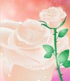 Tarjeta de felicitación con las flores El día de madre de la tarjeta, el día de tarjeta del día de San Valentín ilustración del vector