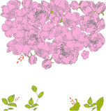 Tarjeta de felicitación con las flores rosadas Fotografía de archivo