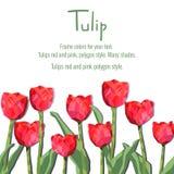 Tarjeta de felicitación con los tulipanes rojos Flores del estilo del polígono Foto de archivo