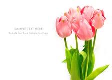 Tarjeta de felicitación con los tulipanes rosados Fotos de archivo libres de regalías