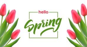 Tarjeta de felicitación con los tulipanes y las letras elegantes manuscritas del cepillo hola de la primavera en el fondo blanco ilustración del vector