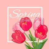 Tarjeta de felicitación con Tulip Flowers floreciente Ilustración del vector Fotografía de archivo