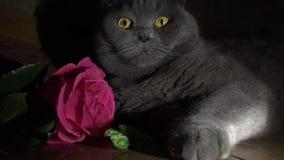 Tarjeta de felicitación con un gato y una rosa almacen de metraje de vídeo