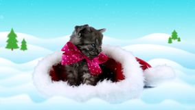 Tarjeta de felicitación de la Feliz Año Nuevo con el texto, pequeño gatito lindo con el arco rosado metrajes
