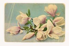 Tarjeta de felicitación de la vendimia con las flores stock de ilustración