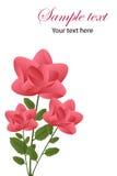 Tarjeta de felicitación de las rosas Foto de archivo libre de regalías